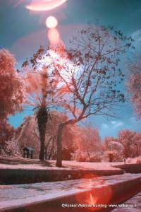 צילום באינפראה אדום בפארק הירקון